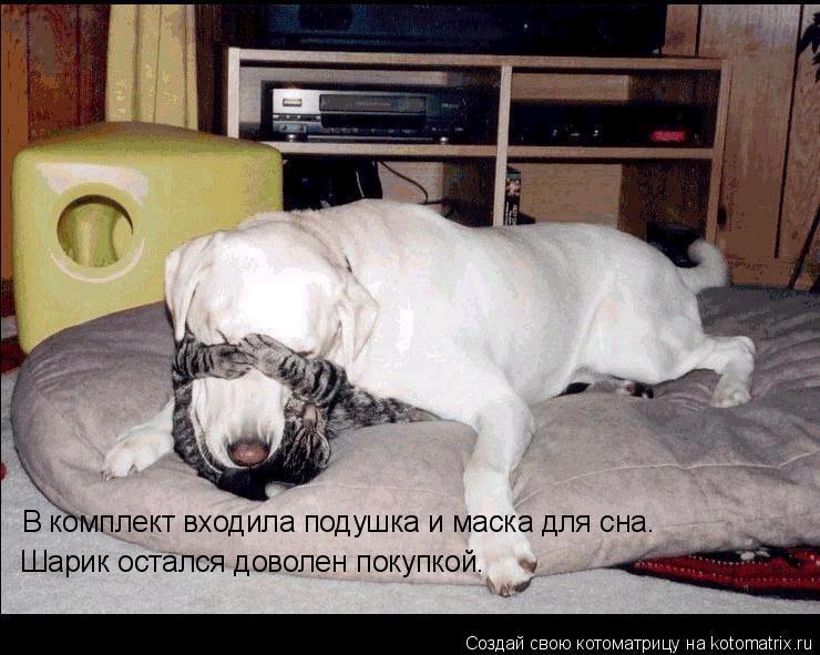 Котоматрица: В комплект входила подушка и маска для сна. Шарик остался доволен покупкой.