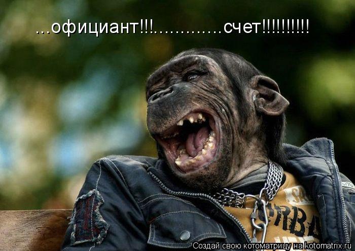Котоматрица: ...официант!!!.............счет!!!!!!!!!!