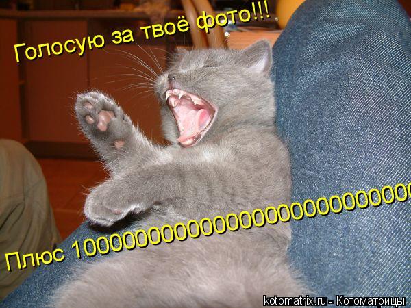 Котоматрица: Голосую за твоё фото!!! Плюс 1000000000000000000000000000000000000000000000000
