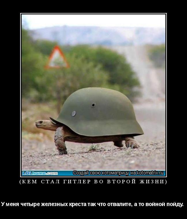 Котоматрица: (Кем стал Гитлер во второй жизни) У меня четыре железных креста так что отвалите, а то войной пойду.