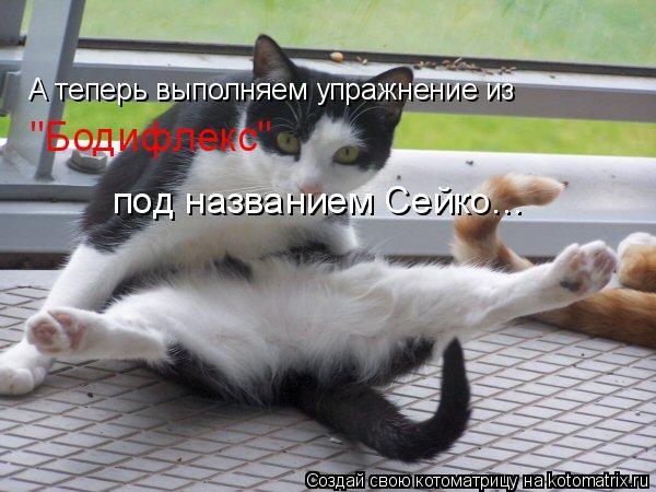 """Котоматрица: А теперь выполняем упражнение из """"Бодифлекс"""" под названием Сейко..."""