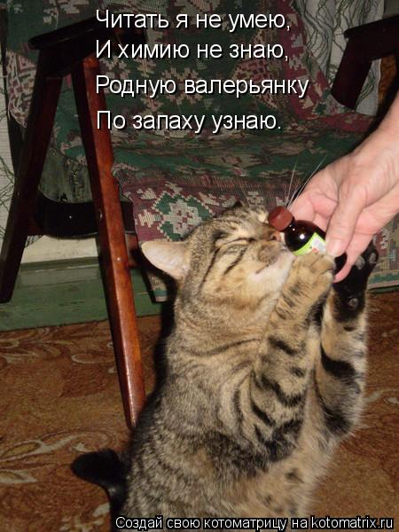 Котоматрица: Читать я не умею, И химию не знаю, Родную валерьянку  По запаху узнаю.