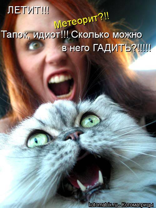 Котоматрица: ЛЕТИТ!!! Метеорит?!! Тапок, идиот!!! Сколько можно в него ГАДИТЬ?!!!!!