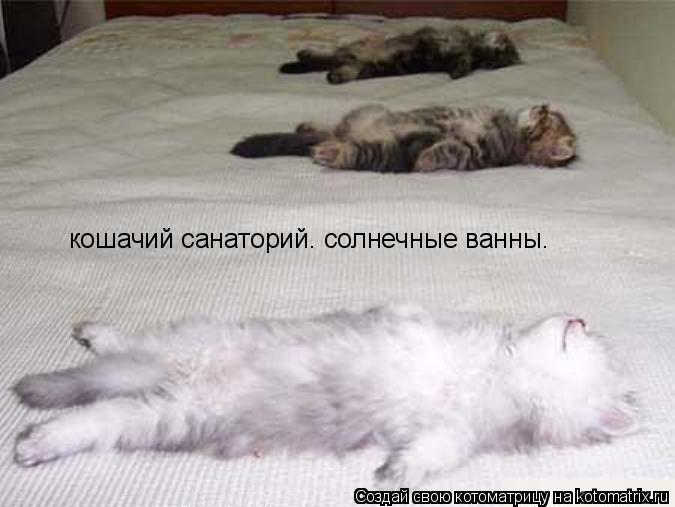 Котоматрица: кошачий санаторий. солнечные ванны.