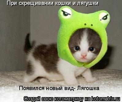 Котоматрица: При скрещивании кошки и  При скрещивании кошки и лягушки Появился новый вид- Лягошка