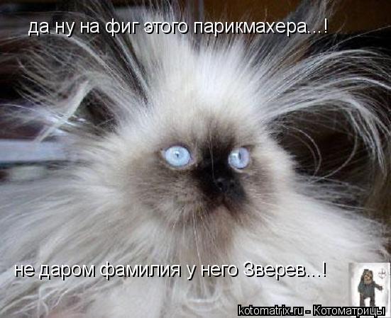 Котоматрица: да ну на фиг этого парикмахера...! не даром фамилия у него Зверев...!
