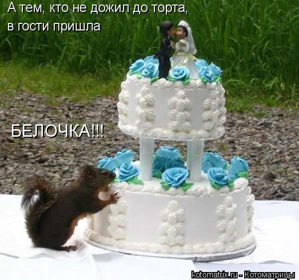 Котоматрица: А тем, кто не дожил до торта, в гости пришла БЕЛОЧКА!!!