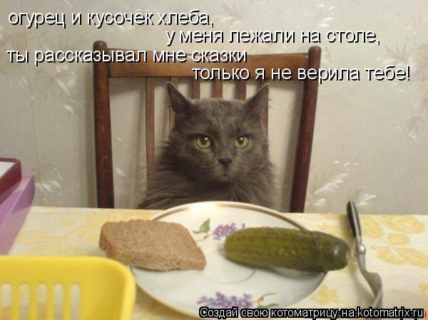 Котоматрица: огурец и кусочек хлеба, у меня лежали на столе, ты рассказывал мне сказки только я не верила тебе!