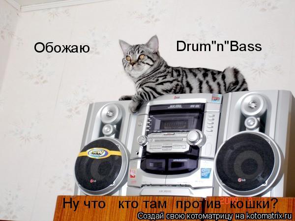 """Котоматрица: Drum""""n""""Bass Обожаю Ну что   кто там  против  кошки?"""
