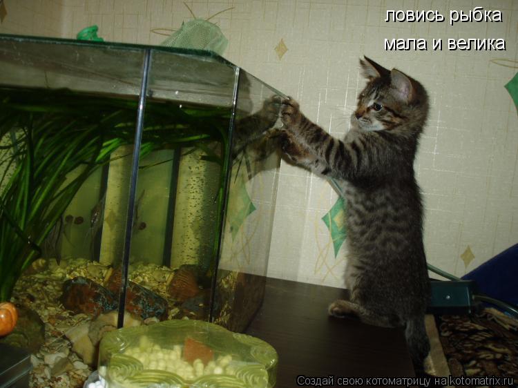 Котоматрица: ловись рыбка мала и велика