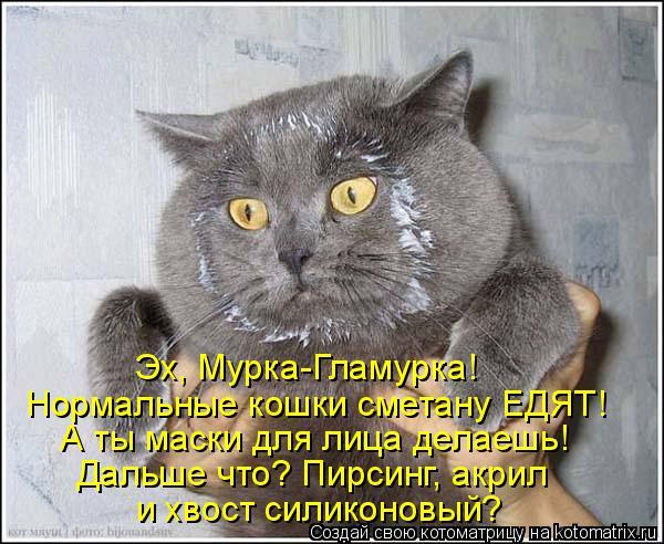 Котоматрица: Эх, Мурка-Гламурка! Нормальные кошки сметану ЕДЯТ! А ты маски для лица делаешь! Дальше что? Пирсинг, акрил и хвост силиконовый?