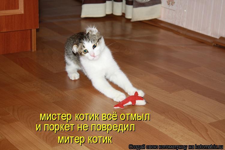 Котоматрица: мистер котик всё отмыл и поркет не повредил митер котик