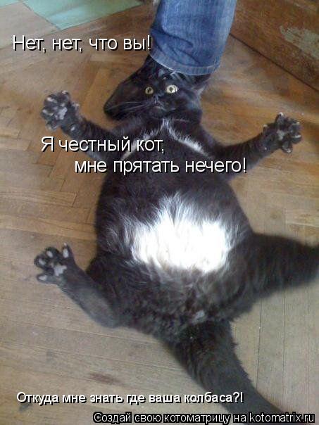 Котоматрица: Нет, нет, что вы! Я честный кот, мне прятать нечего! Откуда мне знать где ваша колбаса?!