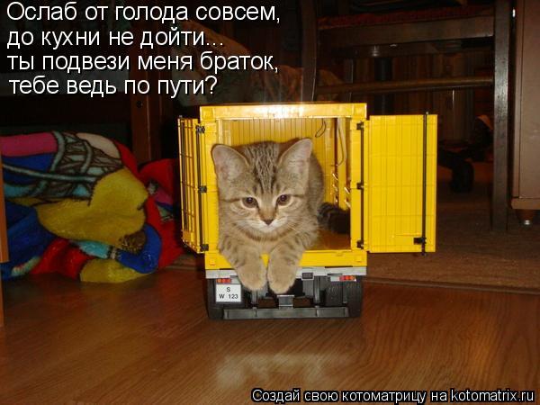 Котоматрица: Ослаб от голода совсем, до кухни не дойти... ты подвези меня браток, тебе ведь по пути?