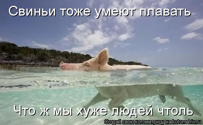 Котоматрица: Свиньи тоже умеют плавать Что ж мы хуже людей чтоль