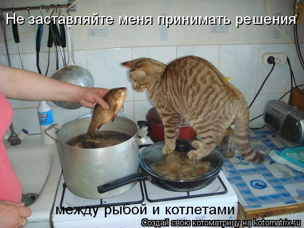 Котоматрица: Не заставляйте меня принимать решения между рыбой и котлетами