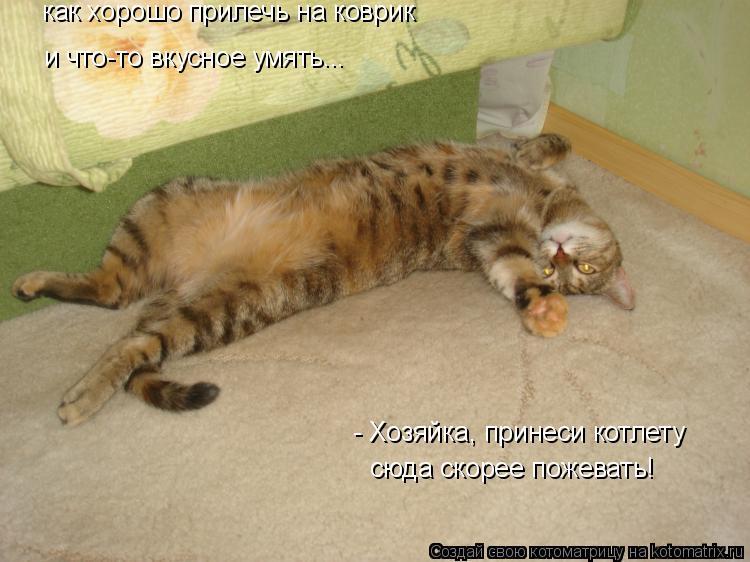 Котоматрица: как хорошо прилечь на коврик - Хозяйка, принеси котлету сюда скорее пожевать! и что-то вкусное умять...