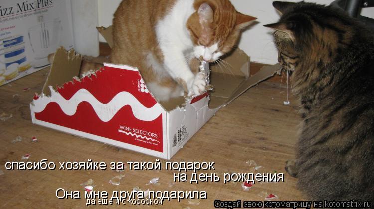 Котоматрица: спасибо хозяйке за такой подарок на день рождения Она мне друга подарила да ещё и с коробкой