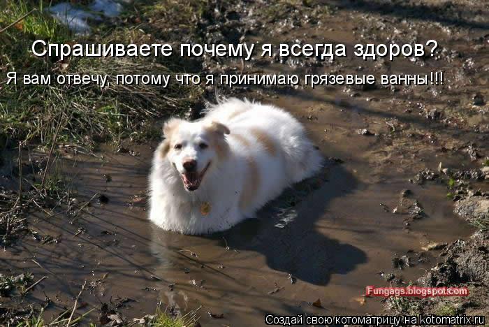 Котоматрица: Спрашиваете почему я всегда здоров? Я вам отвечу, потому что я принимаю грязевые ванны!!!