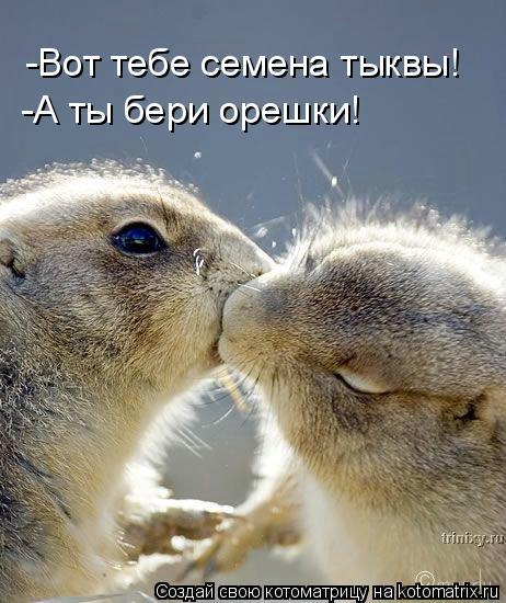 Котоматрица: -Вот тебе семена тыквы! -А ты бери орешки!