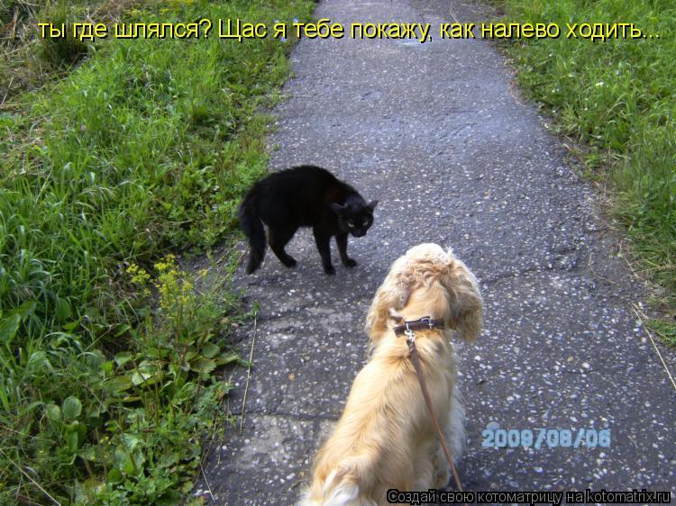 Котоматрица: ты где шлялся? Щас я тебе покажу, как налево ходить...