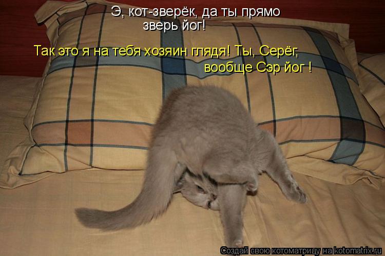 Котоматрица: Э, кот-зверёк, да ты прямо зверь йог! Так это я на тебя хозяин глядя! Ты, Серёг, вообще Сэр йог !