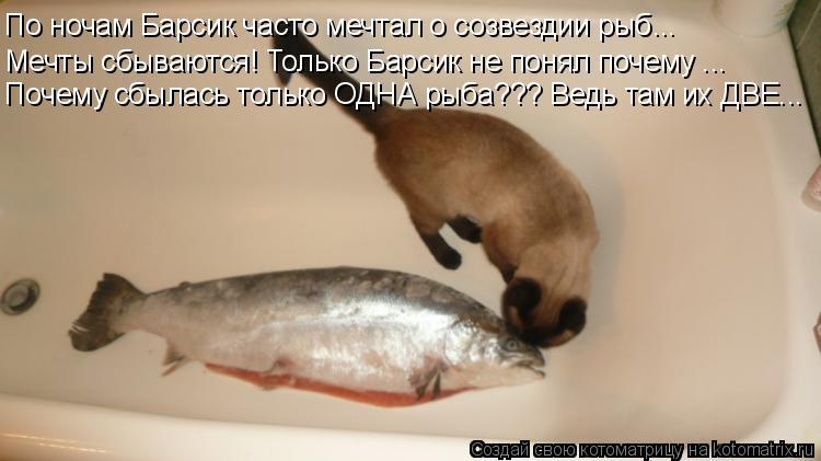 Котоматрица: По ночам Барсик часто мечтал о созвездии рыб... Мечты сбываются! Только Барсик не понял почему ... Почему сбылась только ОДНА рыба??? Ведь там и