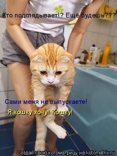 Котоматрица: Кто подглядывает!? Ещё будешь??? Сами меня не выпускаете!  Я кошку хочу! Кошку!