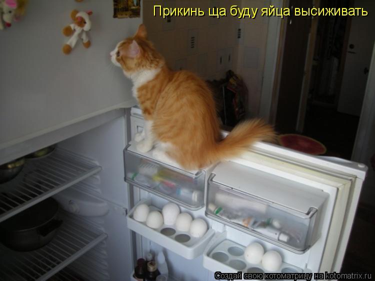 Котоматрица: Прикинь ща буду яйца высиживать