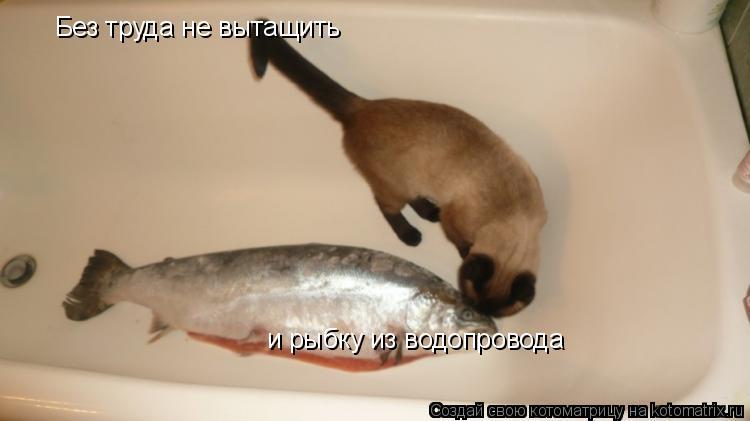 Котоматрица: и рыбку из водопровода Без труда не вытащить