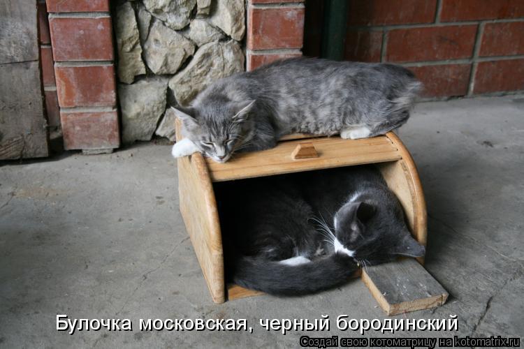 Котоматрица: Булочка московская, черный бородинский