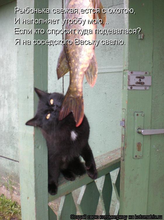 Котоматрица: Рыбонька свежая,естся с охотою, И наполняет утробу мою... Если кто спросит,куда подевалася? Я на соседского Ваську свалю.