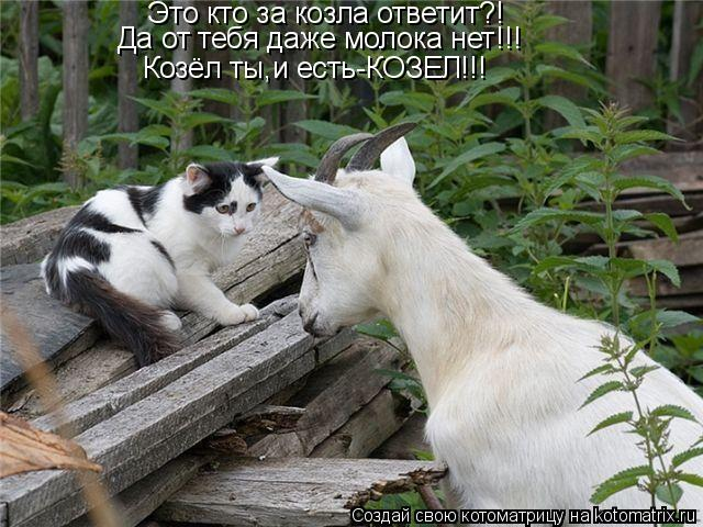 Котоматрица: Это кто за козла ответит?! Да от тебя даже молока нет!!! Козёл ты,и есть-КОЗЕЛ!!!