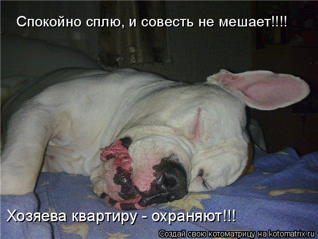 Котоматрица: Спокойно сплю, и совесть не мешает!!!! Хозяева квартиру - охраняют!!!
