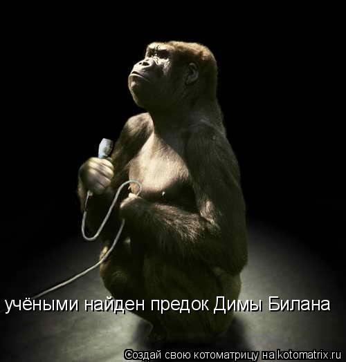 Котоматрица: учёными найден предок Димы Билана