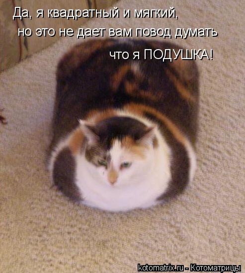 Котоматрица: Да, я квадратный и мягкий,  но это не дает вам повод думать что я ПОДУШКА!