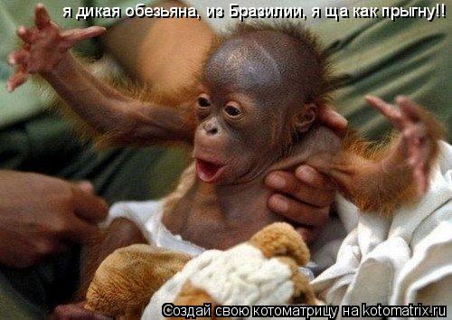 Котоматрица: я дикая обезьяна, из Бразилии, я ща как прыгну!!