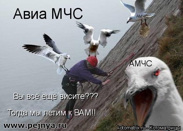 Котоматрица: Авиа МЧС Вы всё ещё висите??? Тогда мы летим к ВАМ!! АМЧС АМЧС