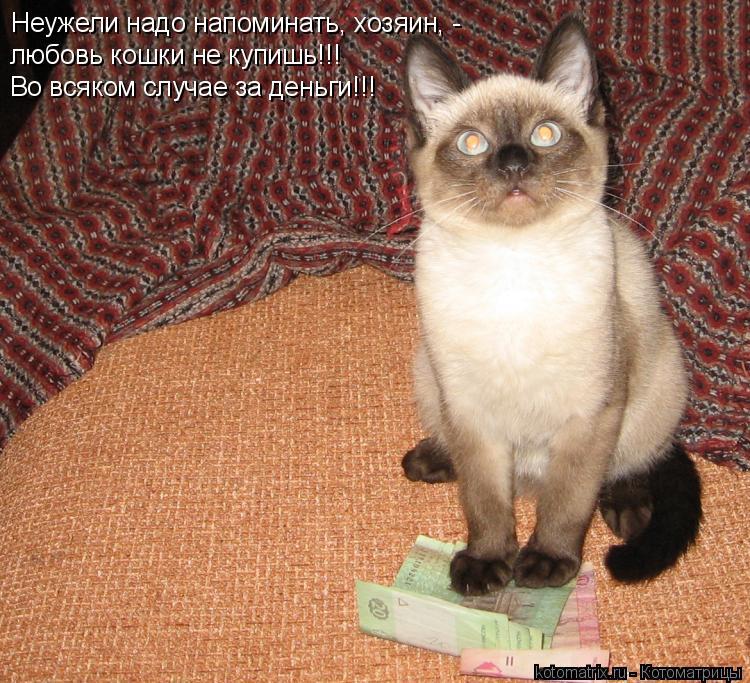 Котоматрица: Неужели надо напоминать, хозяин, - любовь кошки не купишь!!! Во всяком случае за деньги!!!