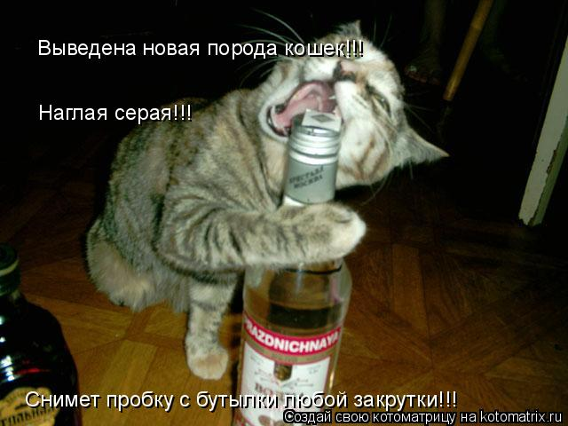 Котоматрица: Выведена новая порода кошек!!! Наглая серая!!!  Снимет пробку с бутылки любой закрутки!!!
