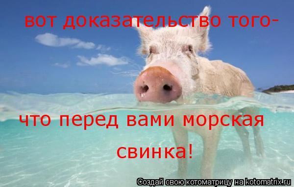 Котоматрица: вот доказательство того- что перед вами морская свинка!