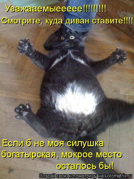 Котоматрица: Уважааемыеееее!!!!!!!!! Смотрите, куда диван ставите!!!! Если б не моя силушка богатырская, мокрое место  осталось бы!