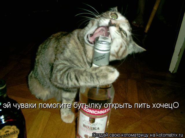 Котоматрица: эй чуваки помогите бутылку открыть пить хочецО