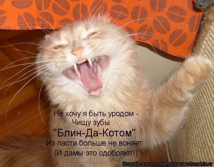 """Котоматрица: Не хочу я быть уродом - Чищу зубы  """"Блин-Да-Котом"""" Из пасти больше не воняет (И дамы это одобряют!)"""
