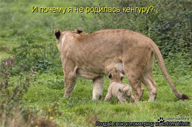 Котоматрица: И почему я не родилась кенгуру?