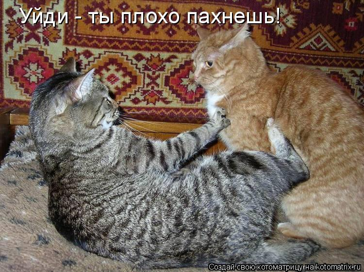 Котоматрица: Уйди - ты плохо пахнешь!