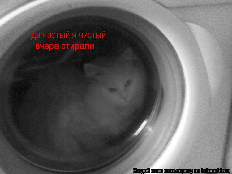 Котоматрица: да чистый я чистый вчера стирали