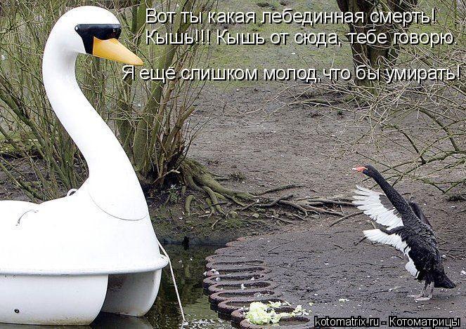 Котоматрица: Вот ты какая лебединная смерть!  Кышь!!! Кышь от сюда, тебе говорю. Я ещё слишком молод,что бы умирать!