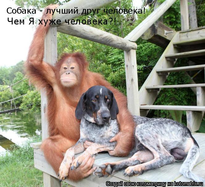 Котоматрица: Собака - лучший друг человека! Чем Я хуже человека?!