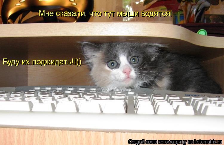 Котоматрица: Мне сказали, что тут мыши водятся! Буду их поджидать!!))